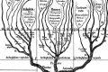 Loricariidae - Tassonomia