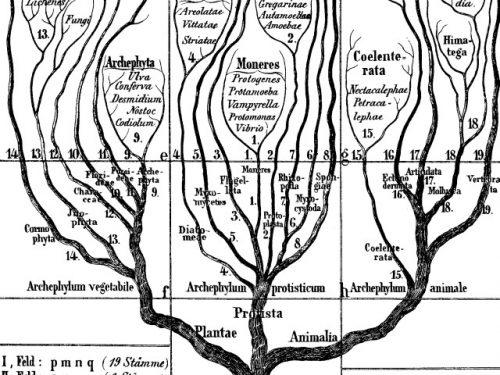 Loricariidae – Tassonomia
